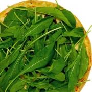 Pizzas Tradicionais: Rúcula - Pizza Pequena (Ingredientes: Molho de Tomate, Mussarela, Orégano, Rúcula)